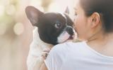 Bachblütenmischung Nr. 102 Urinieren bei Hunden
