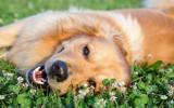 Bachblütenmischung Nr. 104 Epilepsie Hund